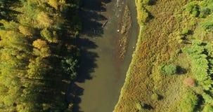 有森林的小河 影视素材