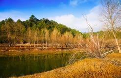 有森林的山河在秋天天 加泰罗尼亚语比利牛斯 库存照片