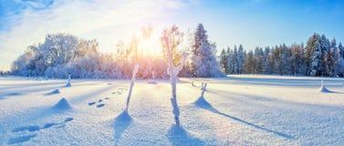 有森林的美好的多雪的风景全景背景的 免版税库存照片