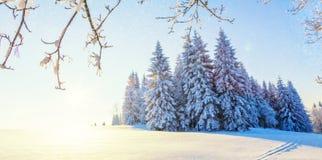 有森林的美好的多雪的风景全景背景的 免版税库存图片