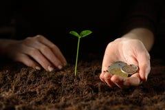 有植物和金钱的手 免版税库存照片