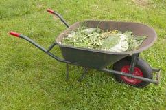 有植物的一辆独轮车保持。 库存图片