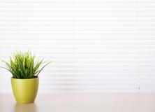 有植物的办公桌工作场所 免版税库存照片