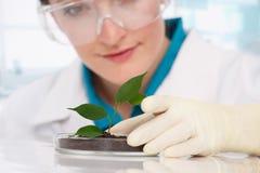 有植物的妇女生物学家 免版税图库摄影