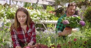 有植物的快乐的工友 股票视频