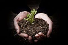 有植物的手 免版税库存照片