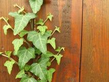 有植物的木墙壁 免版税库存图片