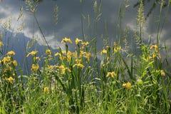 有植物的河 库存图片