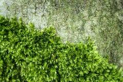 有植物的深青苔森林 免版税库存照片