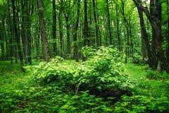 有植物的深刻的青苔前面 免版税库存图片