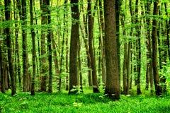 有植物的深刻的青苔前面 免版税库存照片