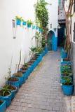 有植物的狭窄的街道在麦地那 更加气味强烈的摩洛哥 免版税库存照片