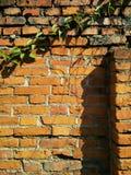 有植物的砖墙 库存图片