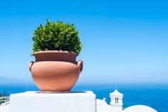 有植物的罐 免版税库存图片