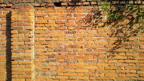 有植物的老砖墙 免版税库存照片