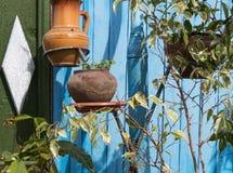 有植物的老罐 库存图片