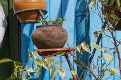 有植物的老罐 免版税库存照片