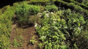 有植物的草本庭院 股票视频