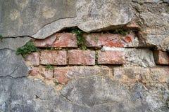有植物的被毁坏的墙壁 库存照片