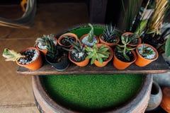 有植物的许多一点泥罐在一家商店旁边的桶形穹窿的在街道上 免版税库存照片