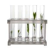 有植物的试管持有人的 免版税图库摄影