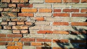 有植物的阴影的老砖墙 库存图片