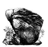 有植被和草的大石鹅卵石 免版税库存照片