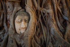 有榕树根的著名菩萨头在Wat Mahathat寺庙在Ayuthaya历史公园 免版税图库摄影