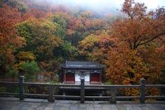 有槭树的寺庙 免版税库存照片