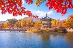 有槭树的景福宫宫殿离开,汉城,韩国 免版税库存图片