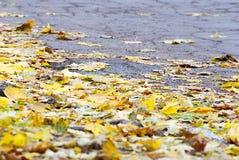 有槭树黄色叶子的秋天路  免版税库存图片
