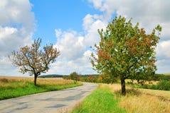 有樱桃树的离开的乡下路 库存照片