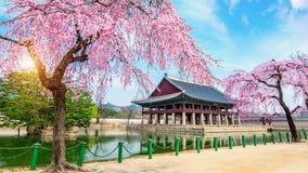 有樱花的景福宫宫殿在春天,汉城在Kor 免版税库存照片