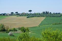有橄榄树小树林的农场在托斯卡纳,意大利 免版税库存图片