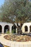 有橄榄树的大面包的增殖的庭院,教会和鱼, Tabgha,以色列 库存照片