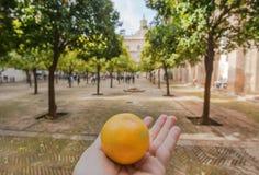 有橙树的庭院在16世纪塞维利亚大教堂,西班牙里面 免版税图库摄影