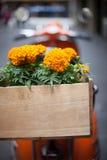 有橙色万寿菊的橙色滑行车在木箱 库存照片