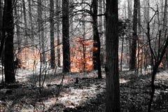 有橙色叶子的黑暗的森林 免版税库存图片