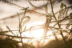 有橙色日落的植物 免版税库存照片
