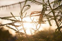 有橙色日落的植物 库存照片