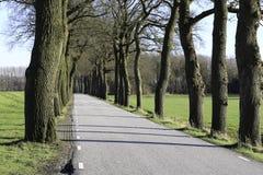 有橡木的冬天路 免版税库存图片