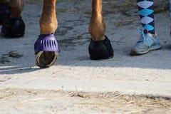 有橡胶响铃的保护的它的铁的一只马` s蹄 库存图片