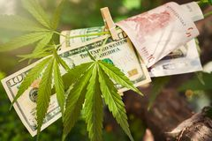 有欧元和美金的大麻叶子 免版税库存图片