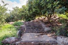 有步的道路在古老犹太人居住地el Kanatir废墟-照顾在戈兰高地的曲拱 免版税库存照片