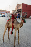 有残破的头的骆驼玩具在开放的市场上在Marakesh 图库摄影