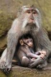 有母亲罗猴短尾猿猴子的小婴孩 免版税库存照片