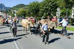 有母牛牧群的农夫在每年季节性牲畜移动的在Engelb 免版税图库摄影