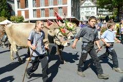 有母牛牧群的农夫在每年季节性牲畜移动的在Engelb 免版税库存图片