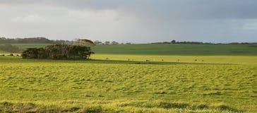 有母牛的农场土地和马和阳光 免版税库存照片