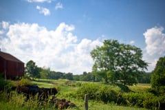 有母牛的农场在宾夕法尼亚 免版税库存照片